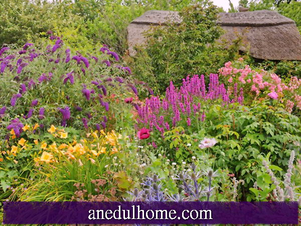 Perfect Plants For Small Gardens Home Repair And Design